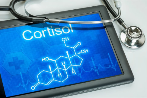 The Role Cortisol Plays in Our Fitness
